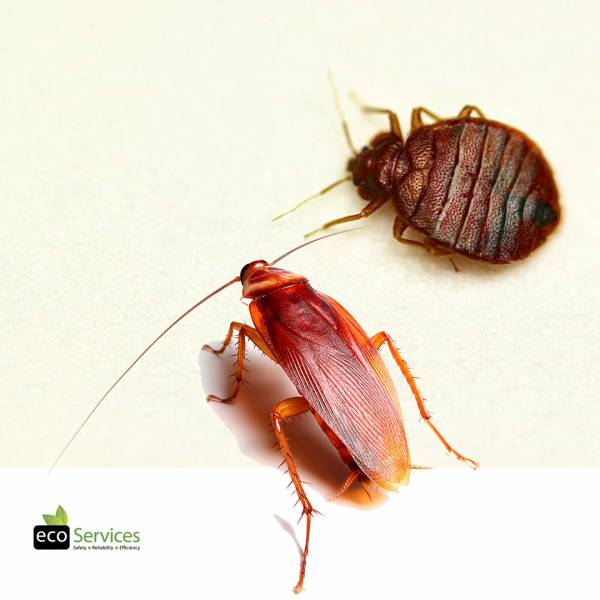 Bed Bugs & Cockroaches Control